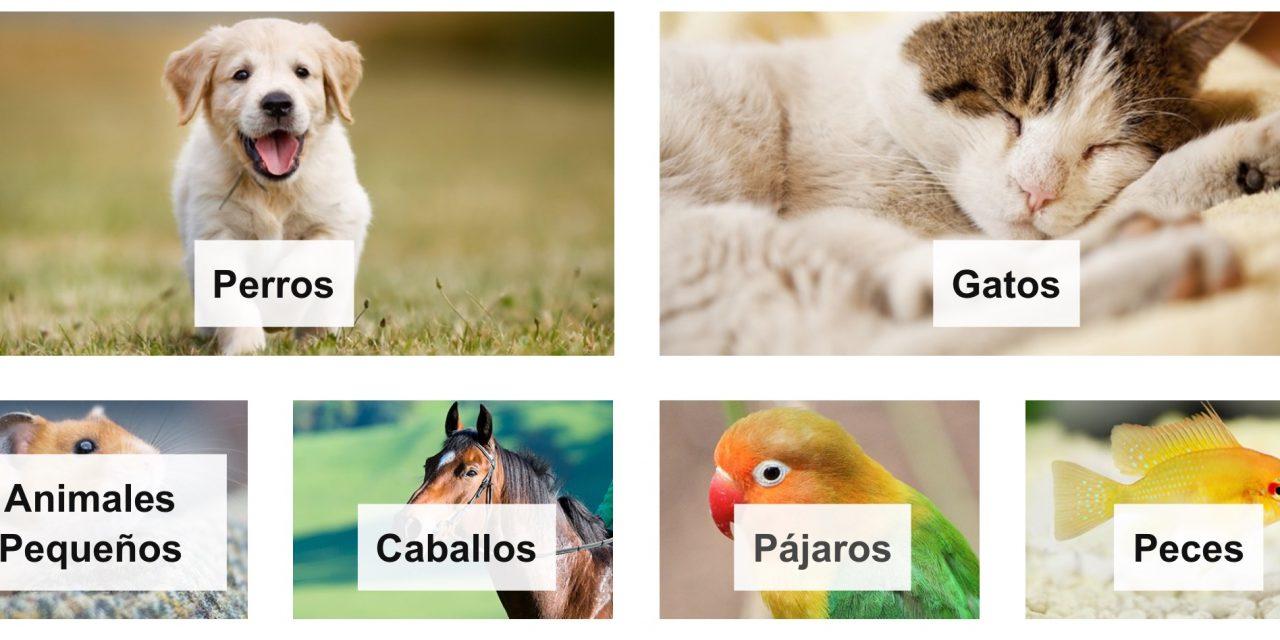 Novedades Amazon: Nueva Tienda de Mascotas